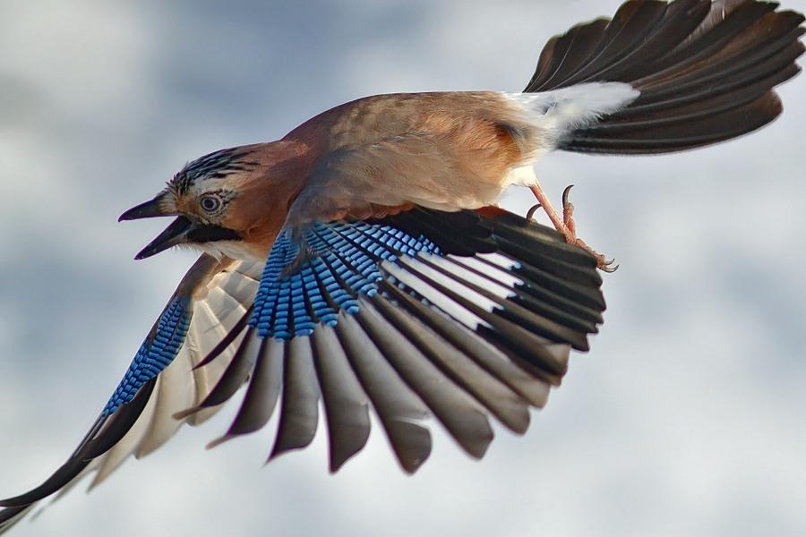 птица с голубыми крыльями картинки цветение